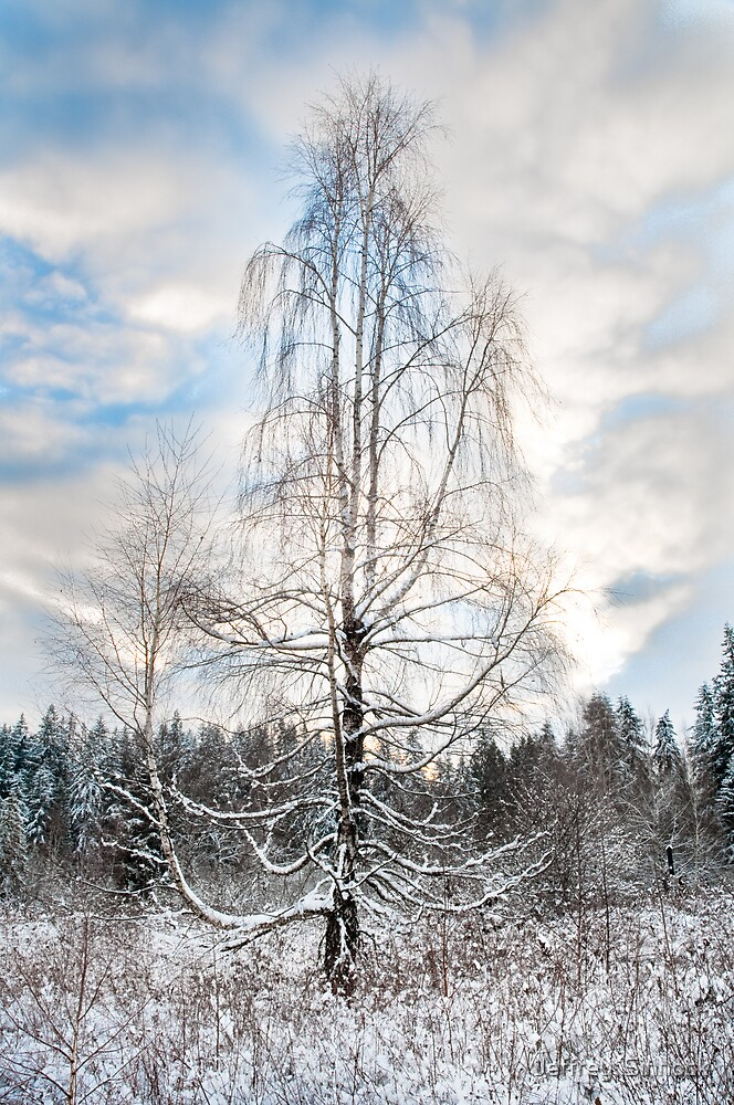 winter stillness by Jeffrey  Sinnock