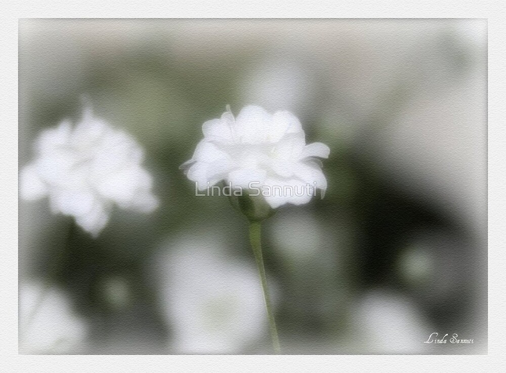 classic white by Linda Sannuti