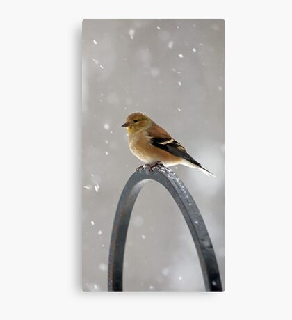 Winter Goldfinch - Falling Snow Canvas Print