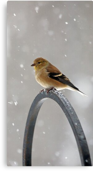 Winter Goldfinch - Falling Snow by T.J. Martin