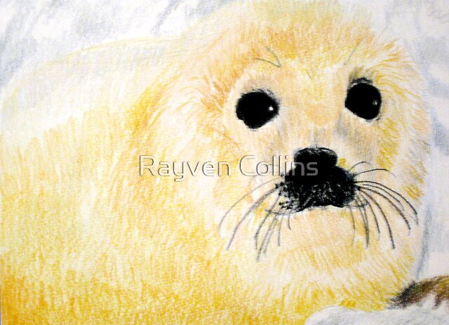 cutsy little seal by Rayven Collins