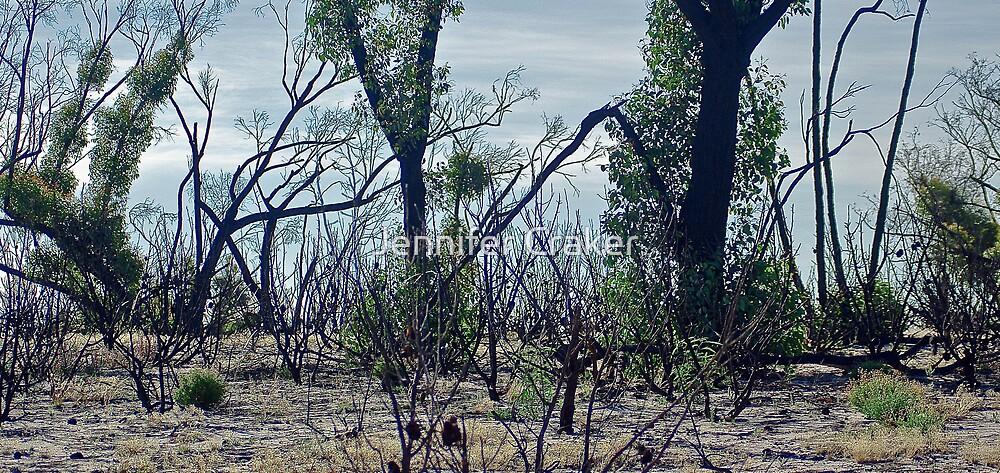 Little Desert National Park V01 by Jennifer Craker