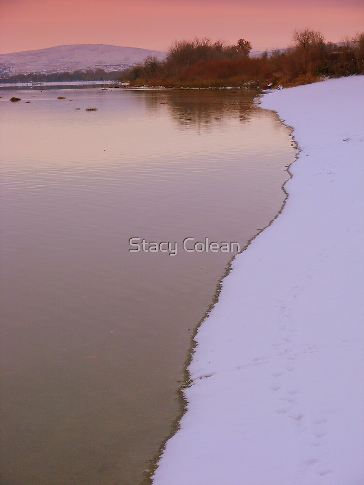 Beautiful and Cold by Stacy Colean