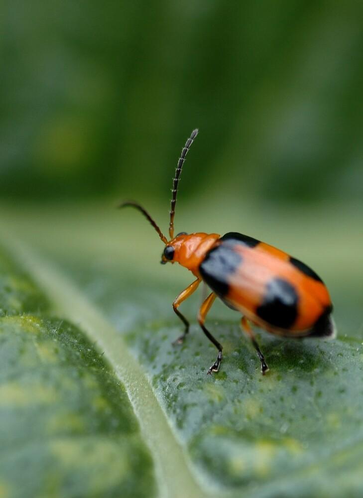Don't bug me! by Rachel81
