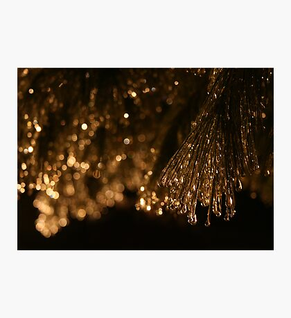 CRYSTAL PINES Photographic Print
