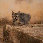 Defiant cat by jhawa
