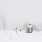 Fräulein Snowy Eule und ihre Schneeflocken von Heather King