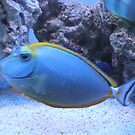 Marine Fish by TedsPhotos