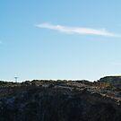 Kestrel on the Wind by Biggzie