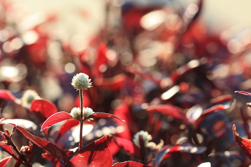 bokeh holiday by malina