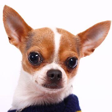 Chihuahua by Kiwix