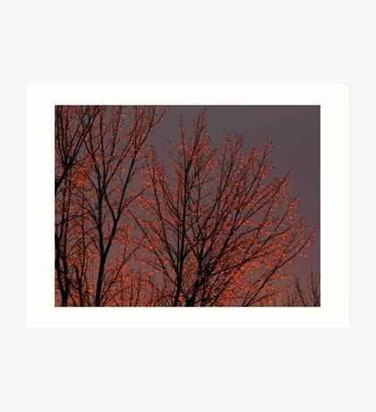 Icy Trees at the End of the Day Art Print