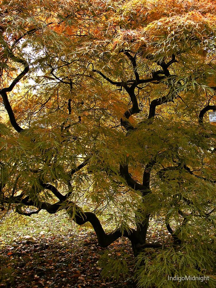 Corkscrew Tree by IndigoMidnight