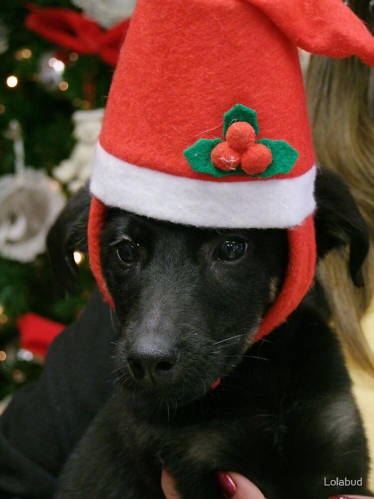 I'll Be Home for Christmas (I hope) by Lolabud