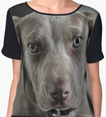 Cute Weimaraner Puppy  Chiffon Top