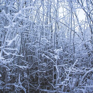 Ice Forest by nicoleee317