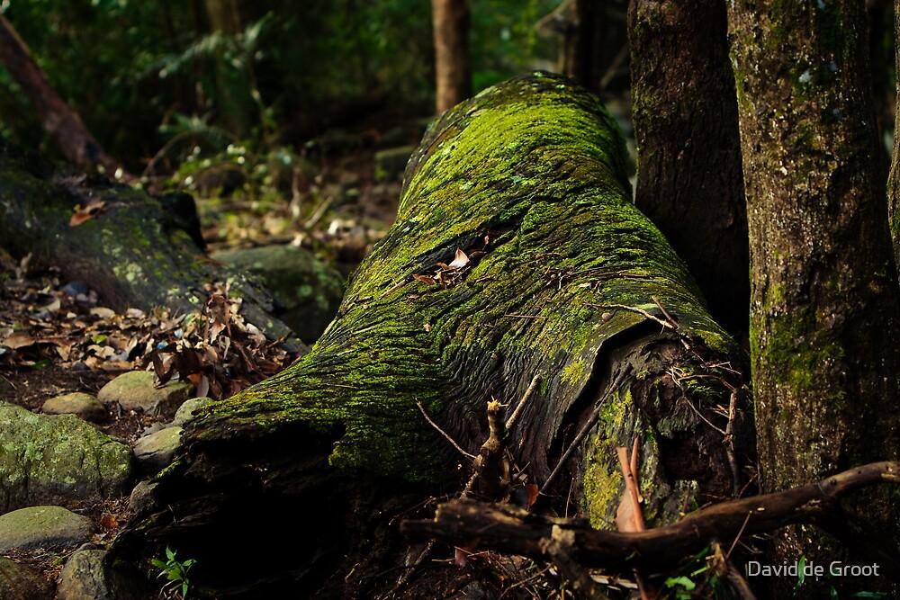 Mossy Log by David de Groot