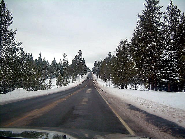 Driving through the Forest after First Snowfall by Edward Henzi