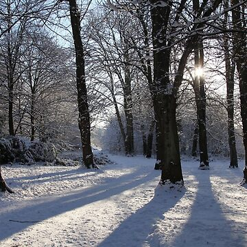 Winter Shadows by JohnDalkin