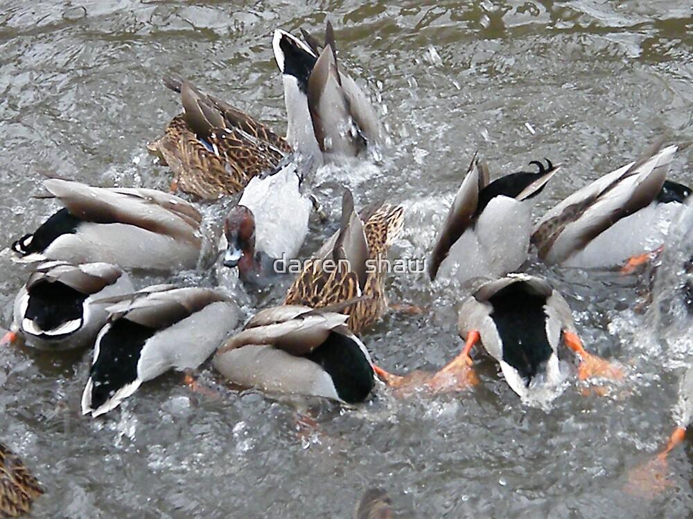 duck porn by darren  shaw