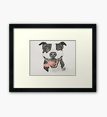 American Pit Bull in Colored Pencil Framed Print