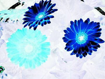 Blooms in negative by Taylor Magoc