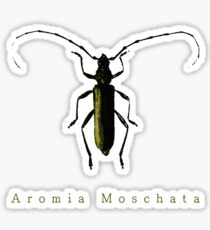 Aromia Moschata Sticker