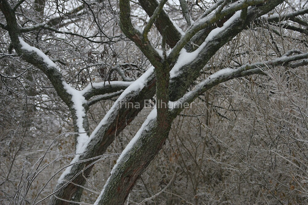 Winter Ice by Tina Billhymer
