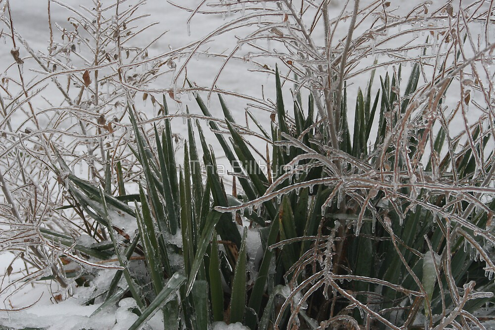 Ice Covered Yucca and Branches by Tina Billhymer