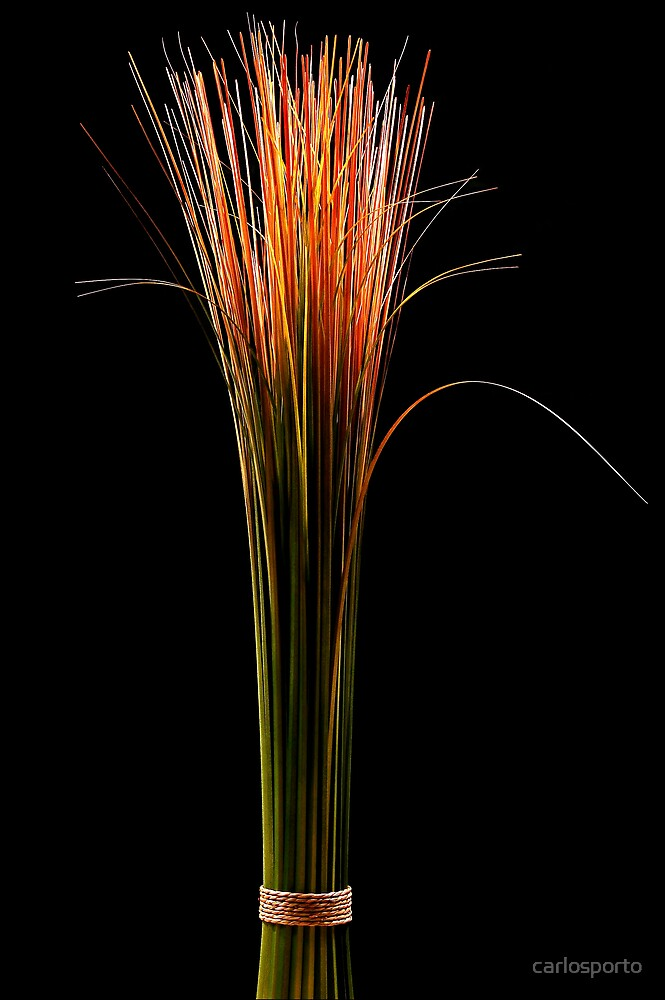 Green Green Grass by carlosporto