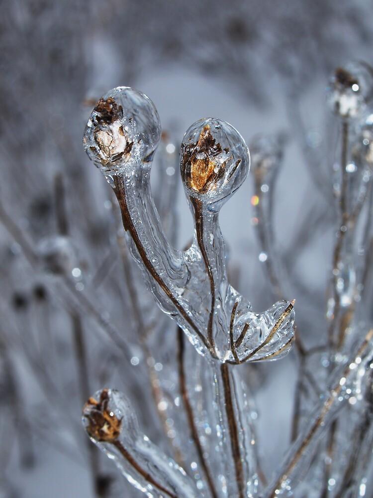 garden of ice by Hannah Grubb