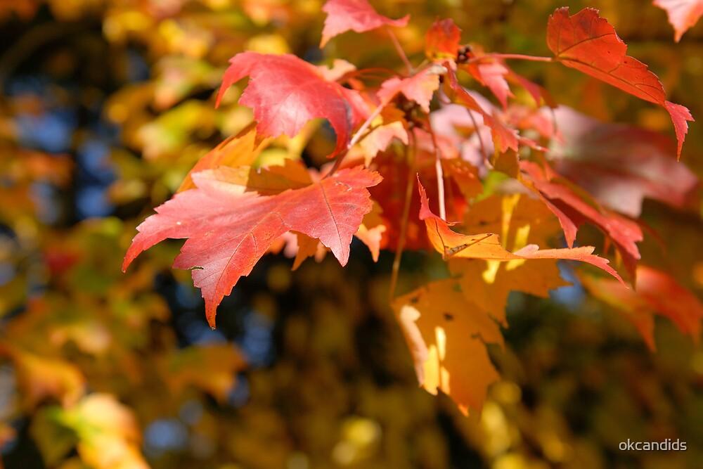 New England Autumn by okcandids