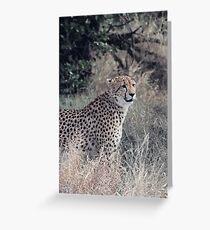 Portrait of a Cheetah Greeting Card