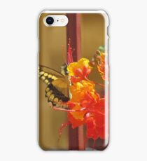 Giant Swallowtail iPhone Case/Skin