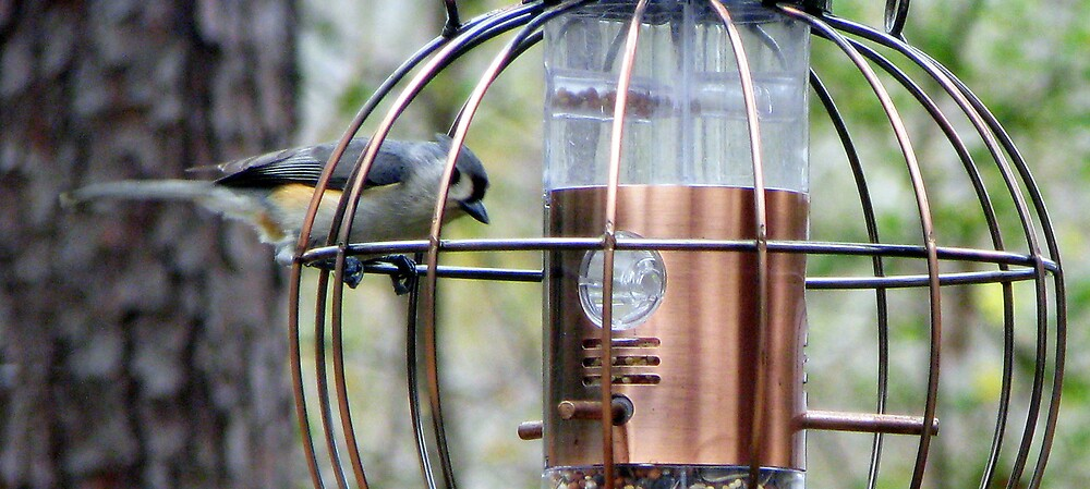Birdie by DottieDees