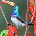 Enjoying the nectar! by Anthony Goldman