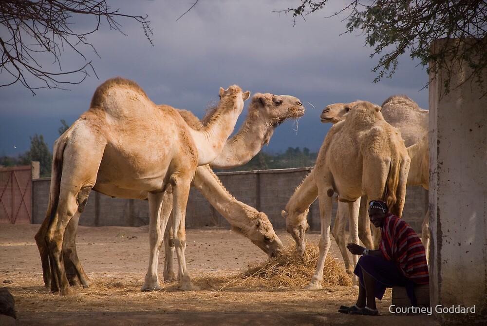 Masai Herder by Courtney Goddard