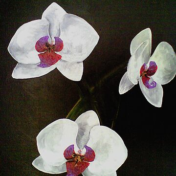 Orchids by pacesophie