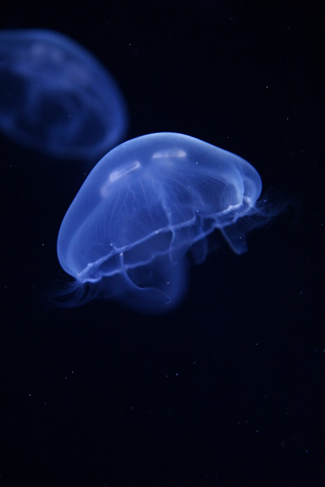 Jelly Blue by Garibaldi