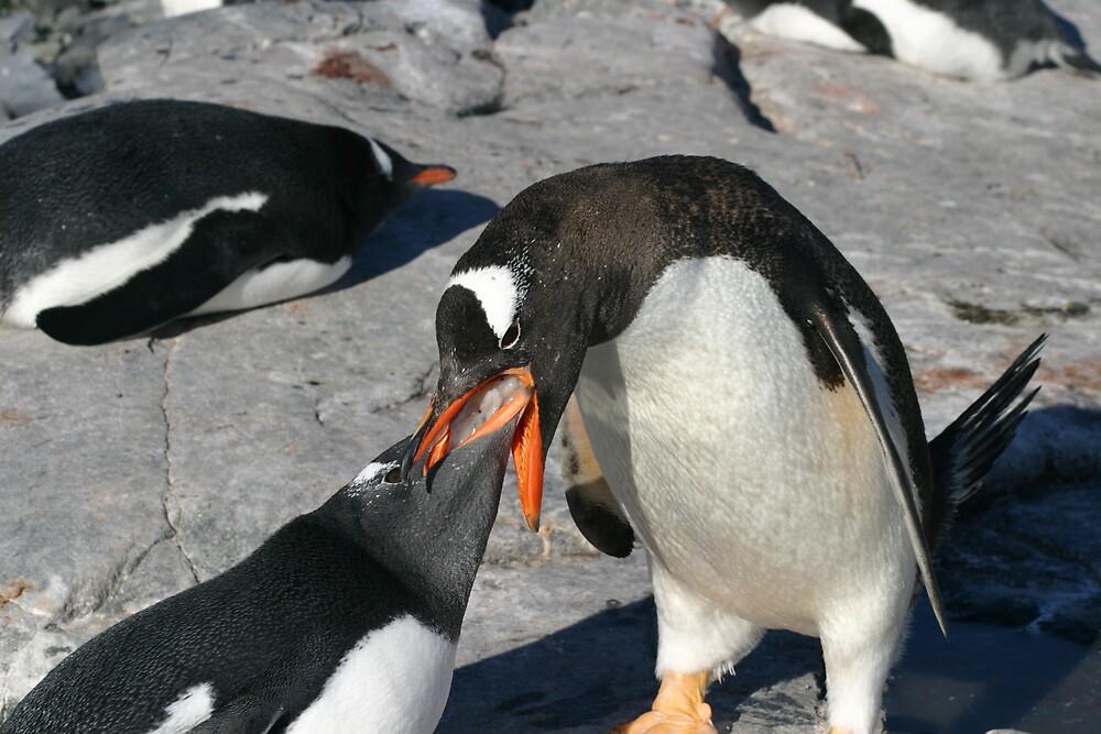 Krill for penguin breakfast by kenconolly