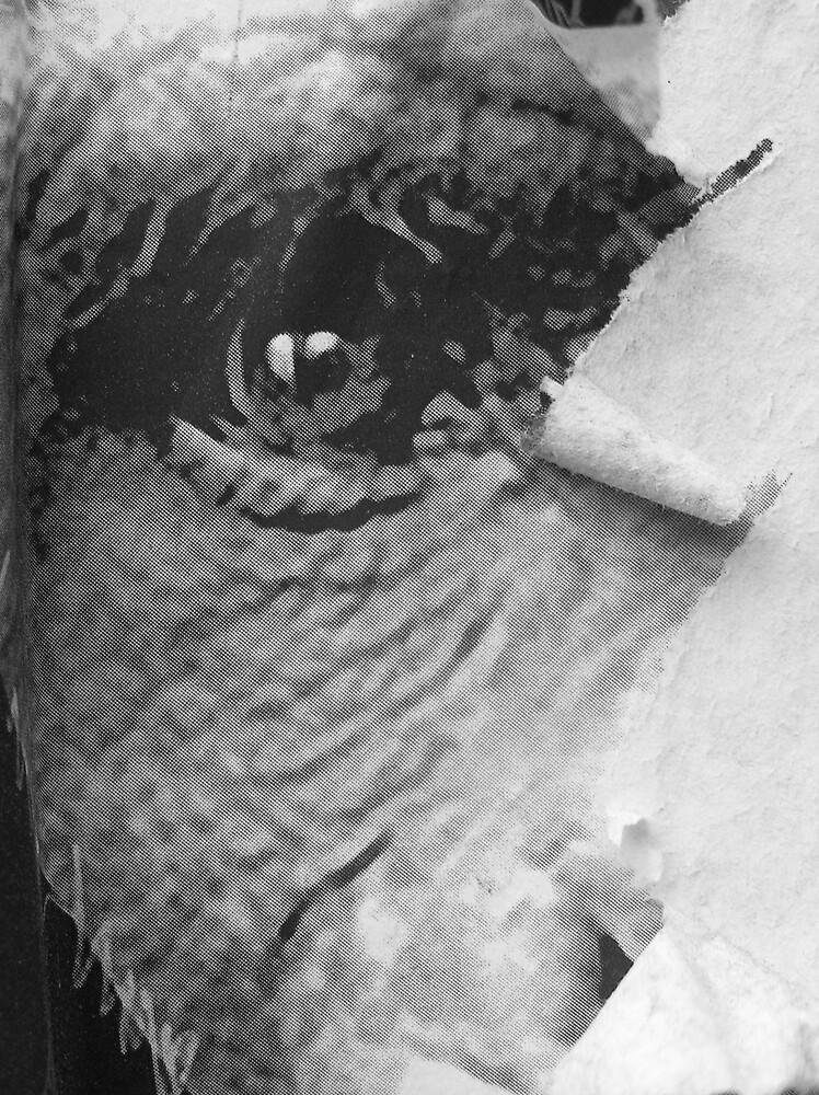 Monkey Eye by Pip Byrne