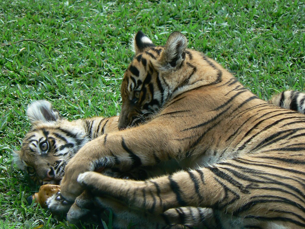 Mother and Cub by Reneebray