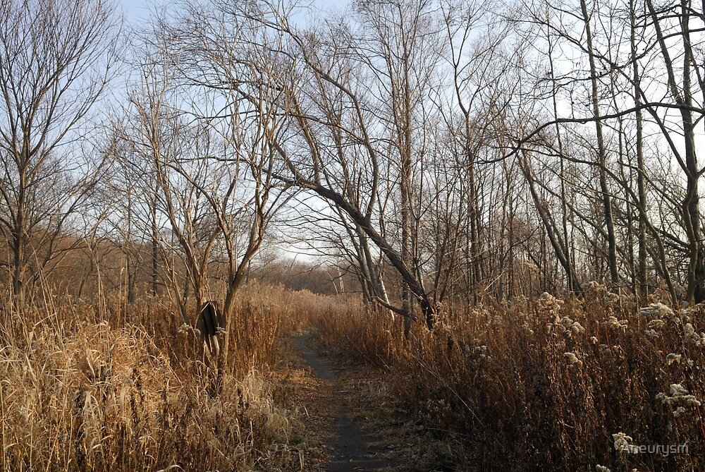 Path  by Aneurysm