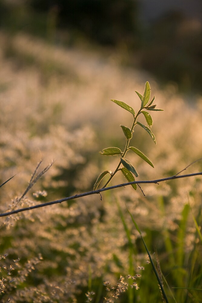 Sprout In A Field by Garibaldi