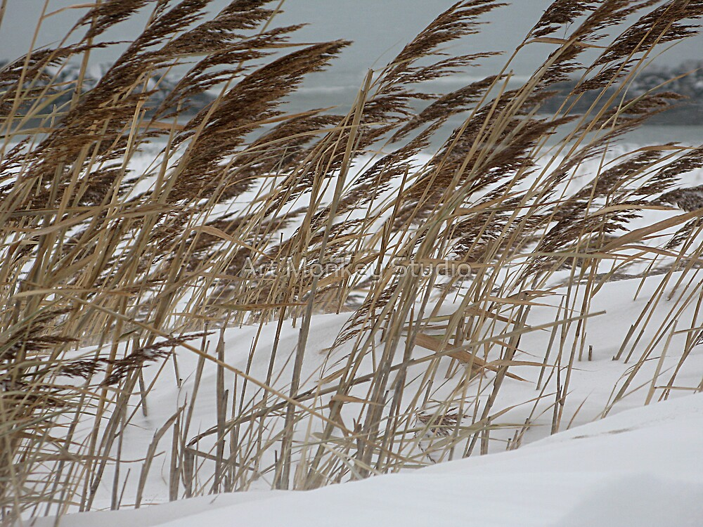 Snowy Beach by Dan Perez