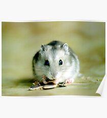 Cute Hamster Poster