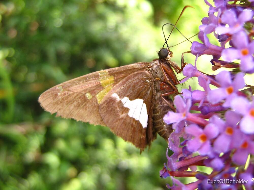 The Butterfly by EyesOfBeholder