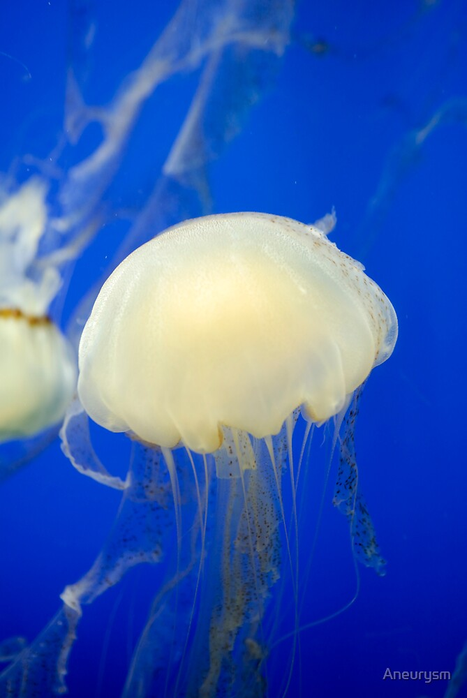 Jelly Fish by Aneurysm