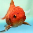 Goldfish by Aneurysm
