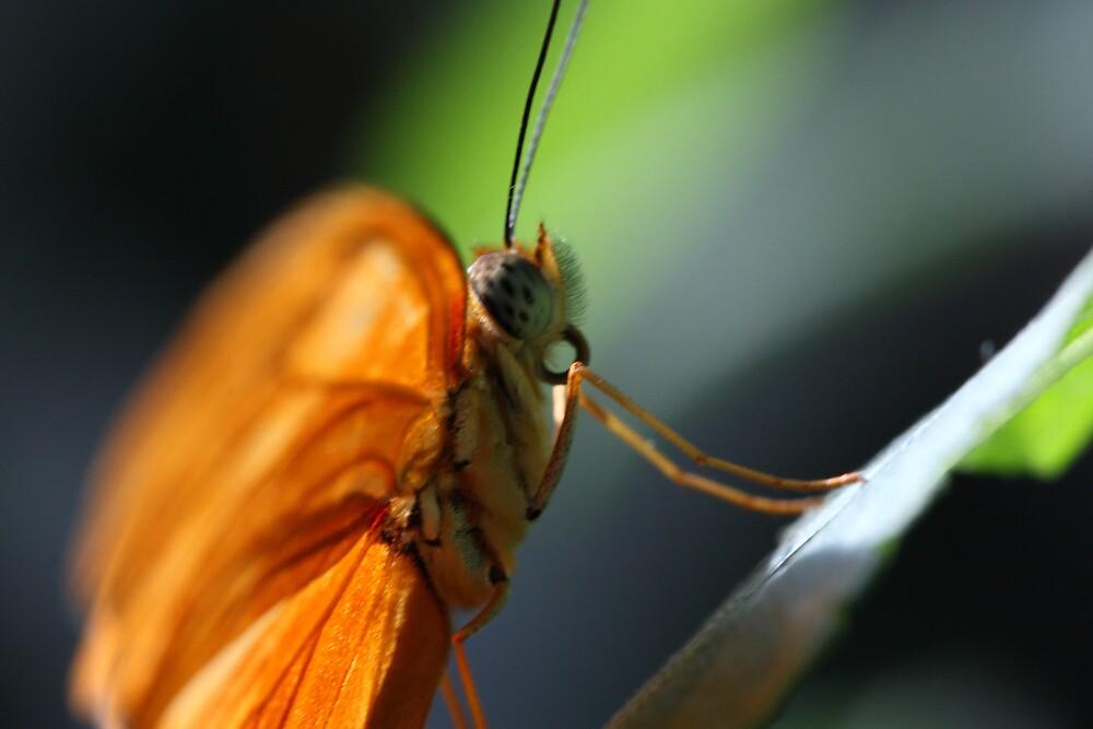 Butterfly 5099 by Doug Wilkening
